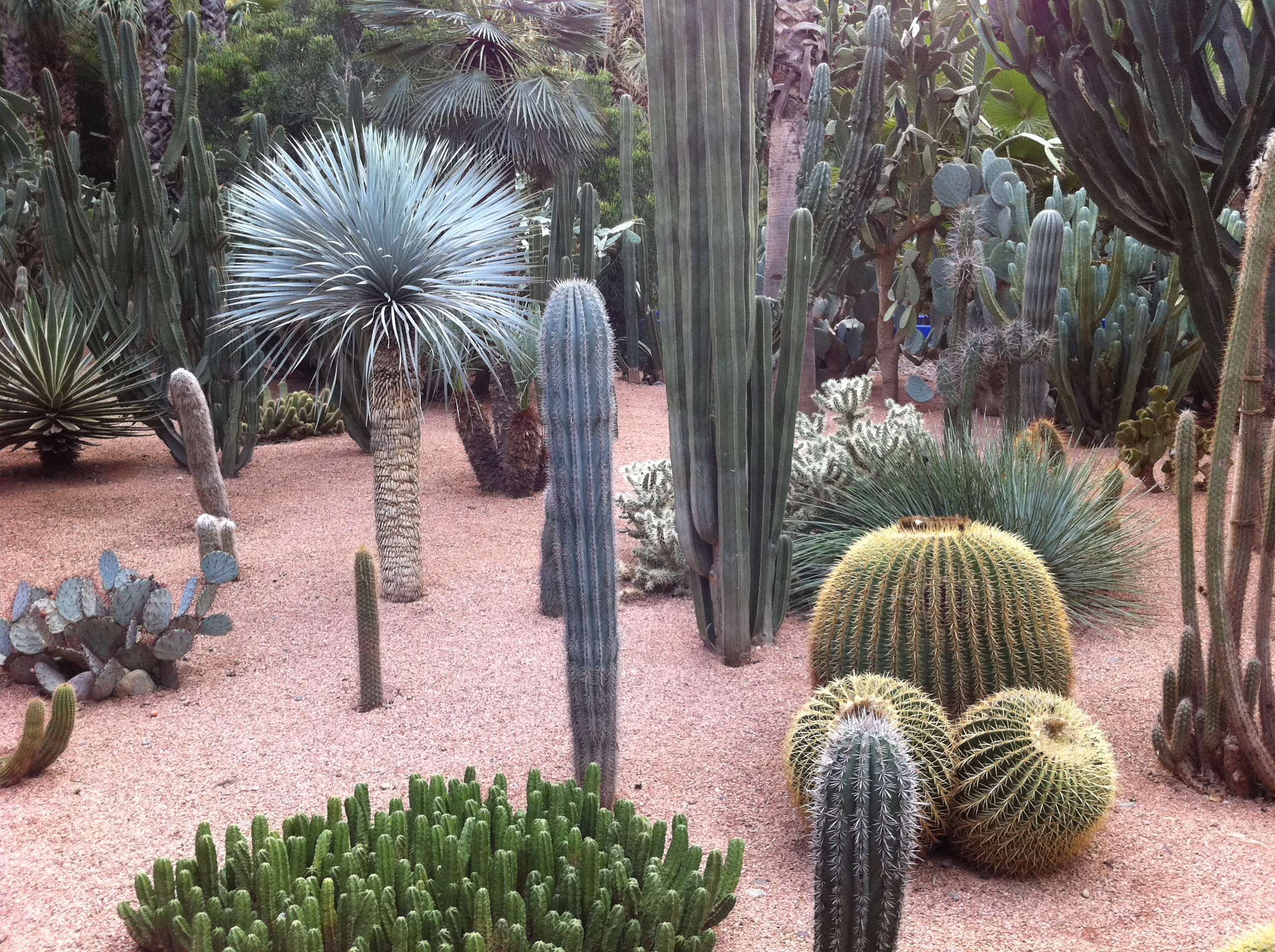 Chicest garden jardin majorelle marrakech morocco the for Decoration jardin cactus